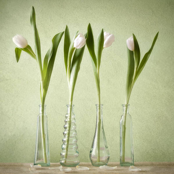 Tulpen Art Print featuring the pyrography Waiting For Spring by Steffen Gierok