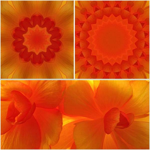 Flowers Art Print featuring the photograph Apricot by Tom Druin
