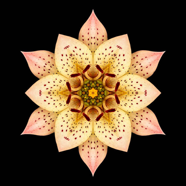 Flower Art Print featuring the photograph Asiatic Lily Flower Mandala by David J Bookbinder