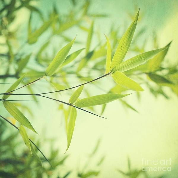 Bamboo Print featuring the photograph Bamboo In The Sun by Priska Wettstein