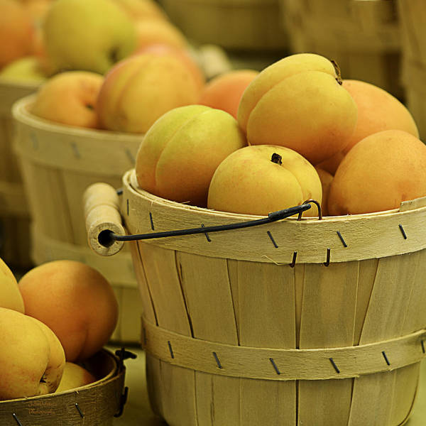 Apricots Art Print featuring the photograph Baskets Of Apricots Squared by Julie Palencia