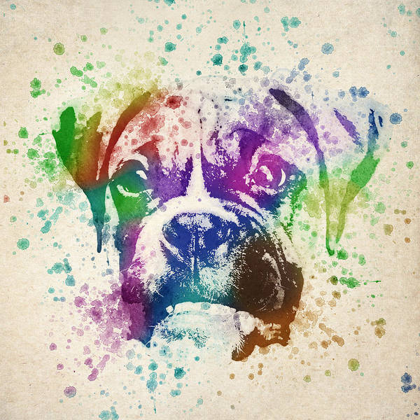 Boxer Art Print featuring the drawing Boxer Splash by Aged Pixel