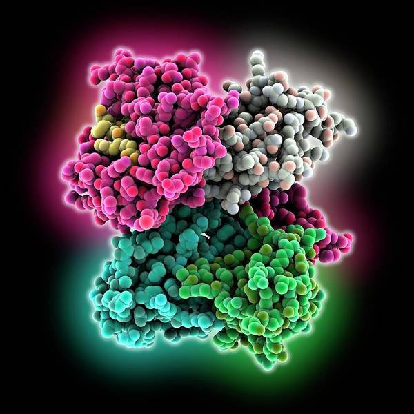 Antigen Art Print featuring the photograph Cd8 Receptor Bound To Antigen by Laguna Design