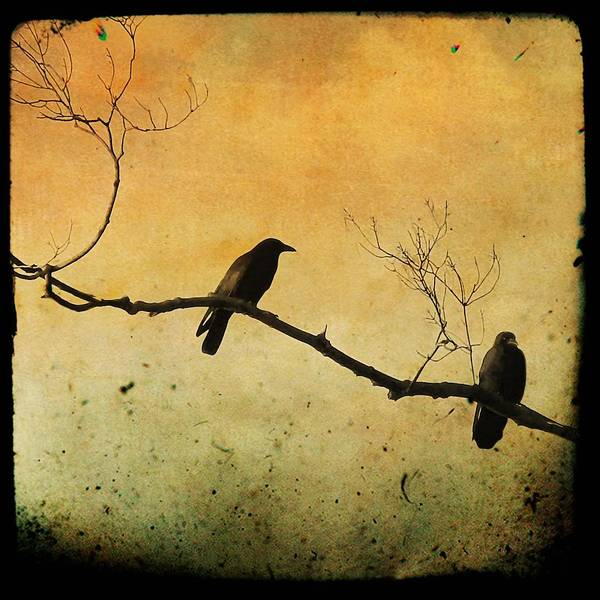 Two Crows Art Print featuring the photograph Crowded Branch by Gothicrow Images