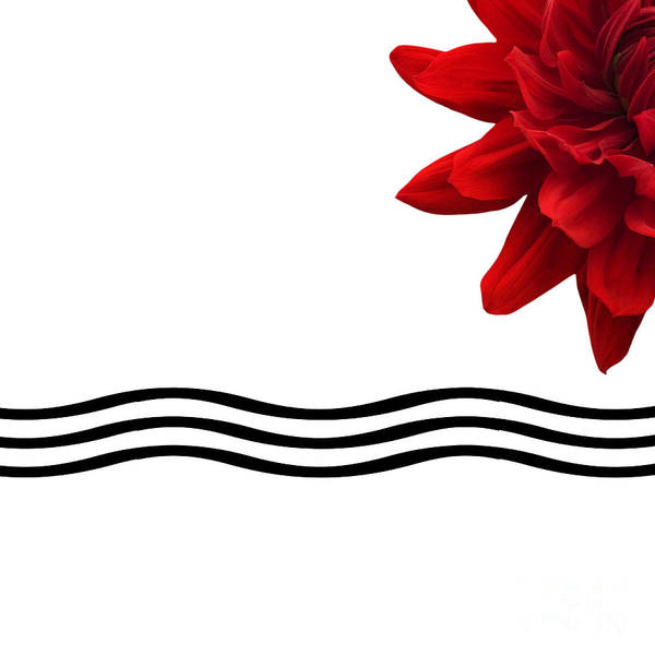 Bathroom Art Print featuring the photograph Dahlia Flower And Wavy Lines Triptych Canvas 3 - Red by Natalie Kinnear