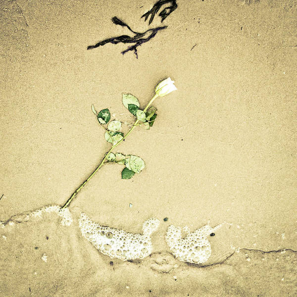 Abandoned Art Print featuring the photograph Dropped Flower by Tom Gowanlock