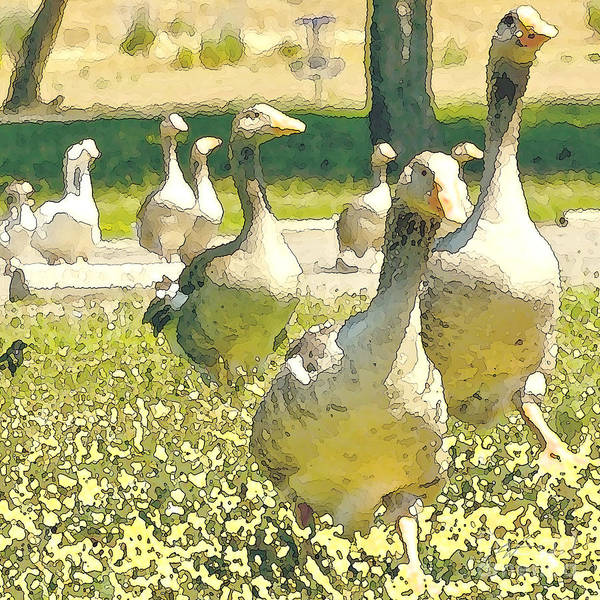 Flock Of Geese Art Print featuring the digital art Duck Duck Goose by Artist and Photographer Laura Wrede