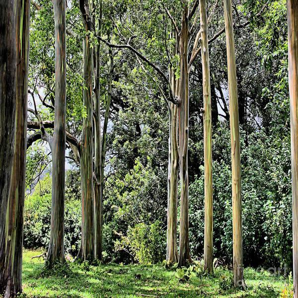 Rainbow Art Print featuring the photograph Eucalyptus by DJ Florek