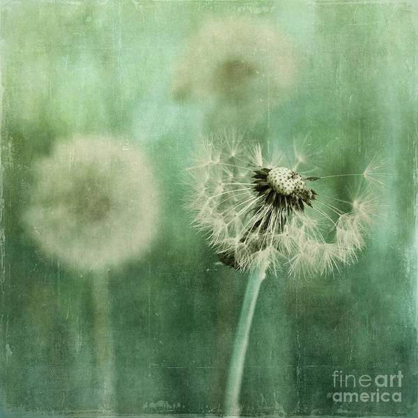 Dandelion Art Print featuring the photograph Gone by Priska Wettstein