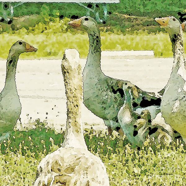 Geese Art Print featuring the photograph Goose Chat by Artist and Photographer Laura Wrede