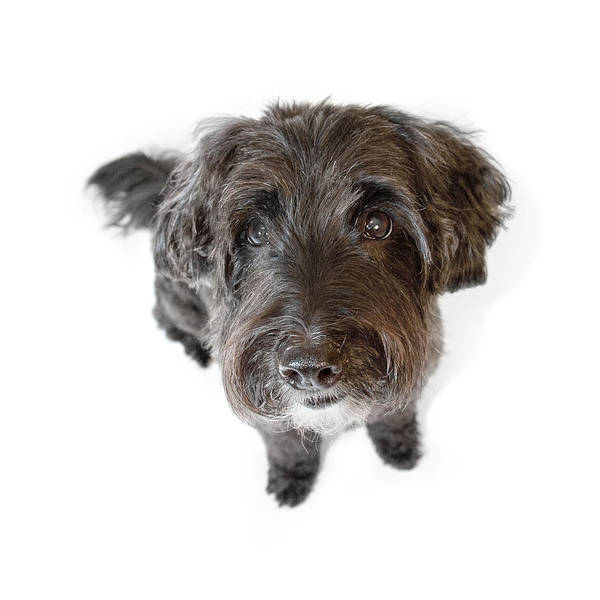 Dog Art Print featuring the photograph Hairy Dog Photographic Caricature by Natalie Kinnear