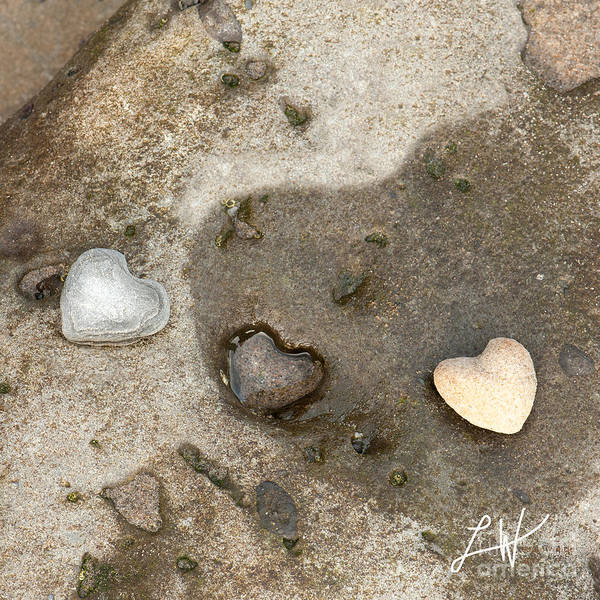 Heart Rocks Art Print featuring the photograph Heart Rock Love by Artist and Photographer Laura Wrede