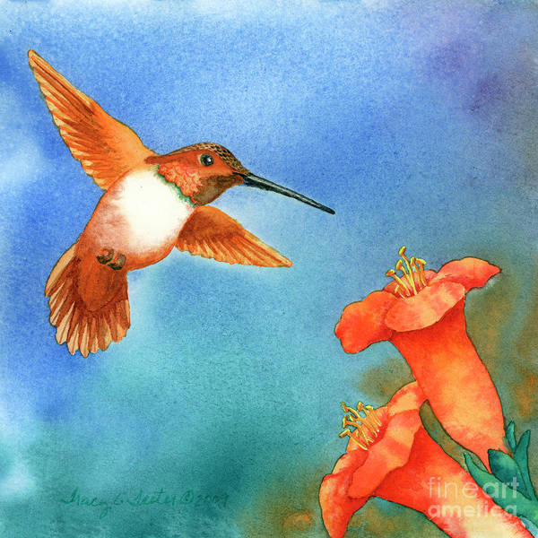 Bird Art Print featuring the painting Hummer by Tracy L Teeter