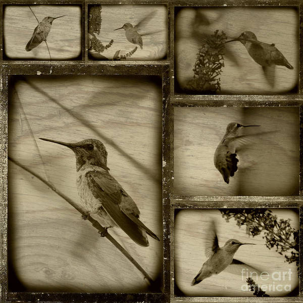 Hummingbirds Art Print featuring the photograph Hummingbird Family Portraits by Carol Groenen