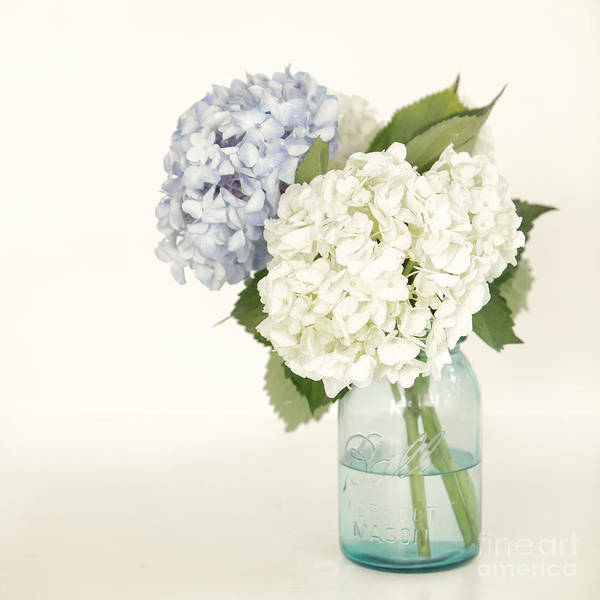 Hydrangea Art Print featuring the photograph In The Jar by Kay Pickens