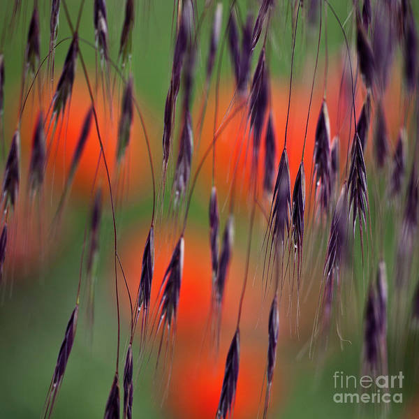 Abstract Art Print featuring the photograph In The Meadow by Heiko Koehrer-Wagner
