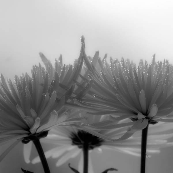 Flowers Art Print featuring the photograph Intimacy by Tom Druin