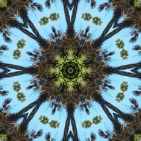 Kaleidoscope Art Print featuring the photograph Kaleidoscope Palms by Cathy Lindsey