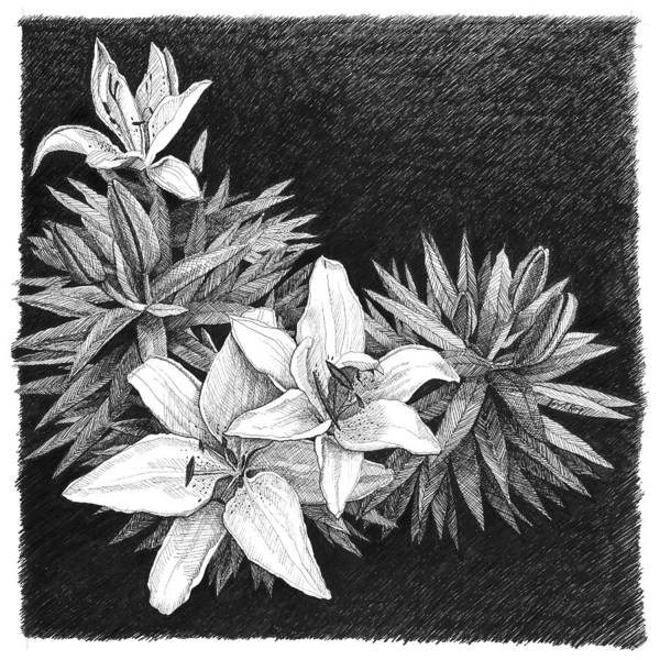 Lilies Art Print featuring the drawing Lilies In Pen And Ink by Janet King