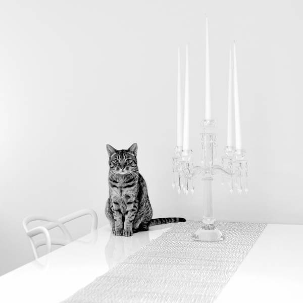 Cat Art Print featuring the photograph Linda by Ari Salmela