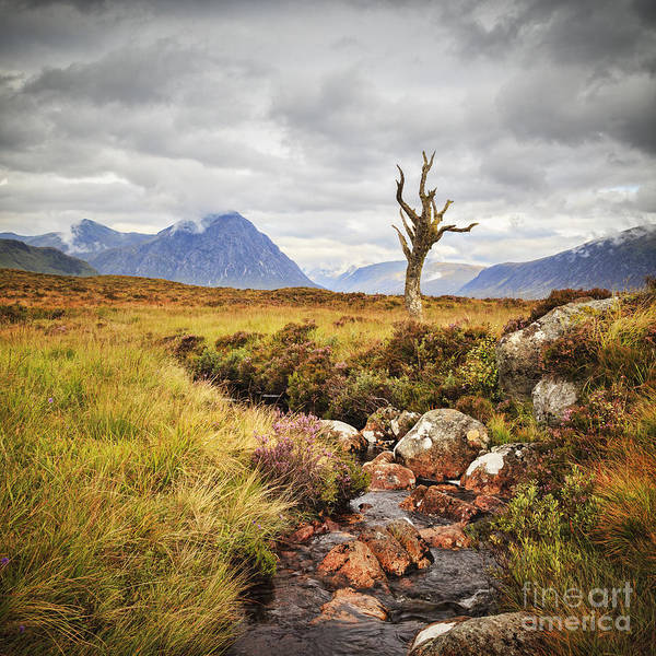 Buchaille Etive Mhor Art Print featuring the photograph Lone Tree Rannoch Moor Scotland by Colin and Linda McKie