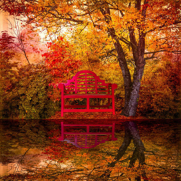 American Art Print featuring the photograph Meet Me At The Pond by Debra and Dave Vanderlaan