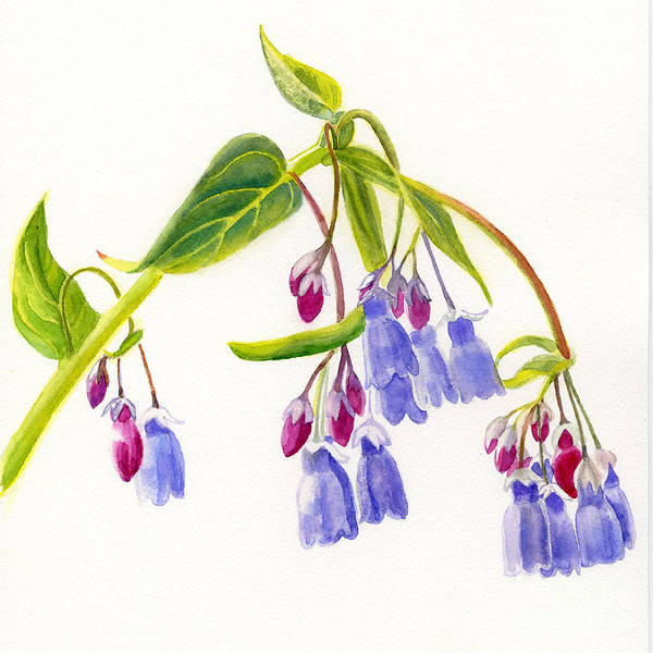 Bluebells Art Print featuring the painting Mountain Bluebells by Sharon Freeman