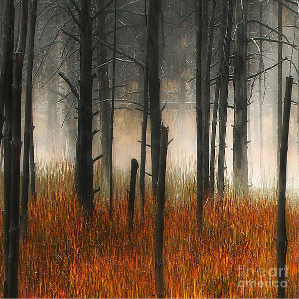Mute Dog Forest Art Print featuring the photograph Mute Dog Forest Triptych Panel 1 by Clare VanderVeen