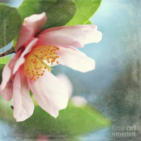Camellia Art Print featuring the photograph Pink Camellia by Sylvia Cook