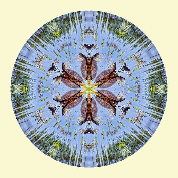 Mandala Art Print featuring the photograph Red Bellied Turtle Mandala by Beth Sawickie