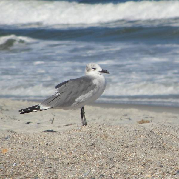 Sea Art Print featuring the photograph Seagulls At Fernandina 2 by Cathy Lindsey