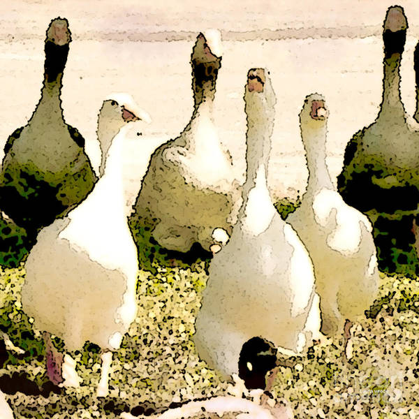 Geese Art Print featuring the photograph Six Geese And A Duck by Artist and Photographer Laura Wrede