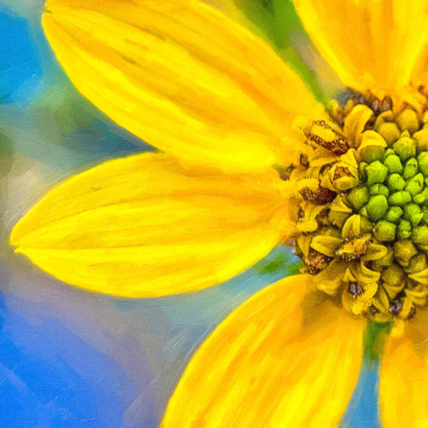 Stone Art Print featuring the photograph Stone Mountain Yellow Daisy Details - North Georgia Flowers by Mark E Tisdale