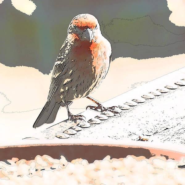 Zebra Finch Art Print featuring the digital art Summer Bird by Artist and Photographer Laura Wrede
