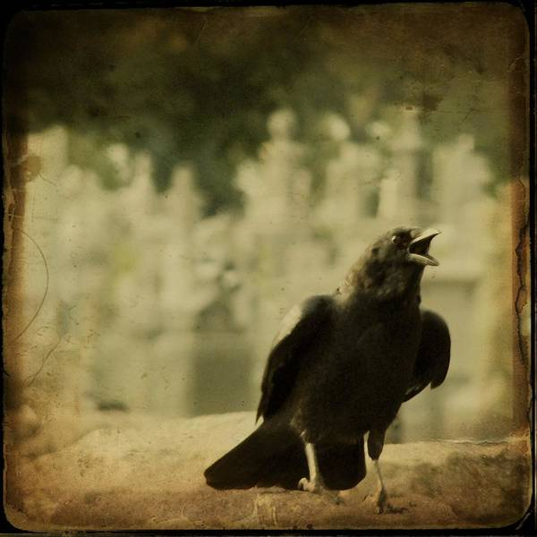 Crow Caws Art Print featuring the photograph The Caw by Gothicrow Images
