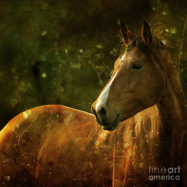 Horse Art Print featuring the photograph The Fairytale Horse by Angel Ciesniarska