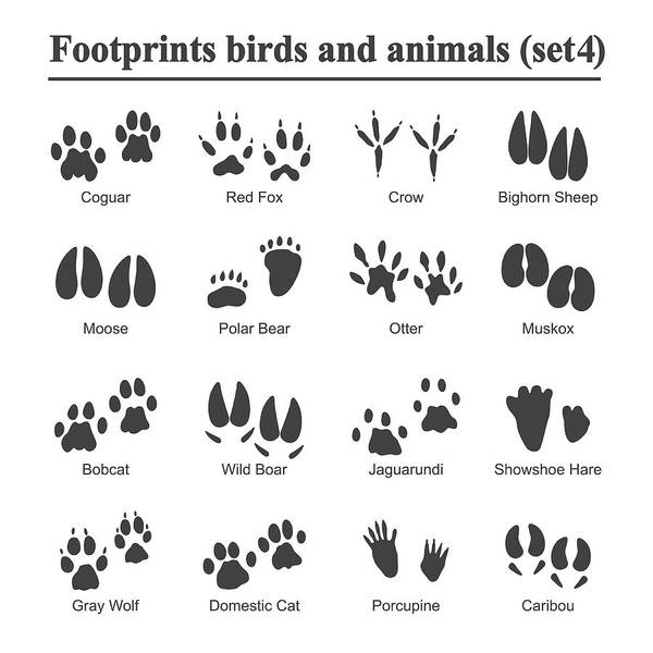 Wildlife Animals And Birds Footprint Animal Paw Prints Vector Set Footprints Of Variety Of Animals Illustration Of Black Silhouette Footprints Art