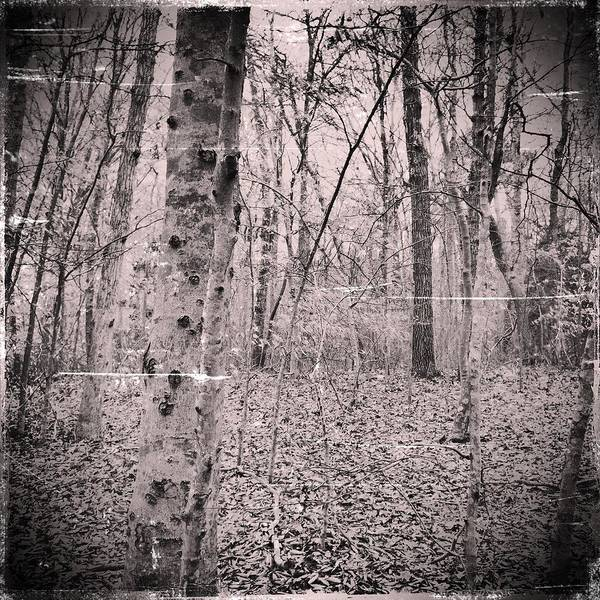 Woods Art Print featuring the photograph Woods Darkly by Frank Winters
