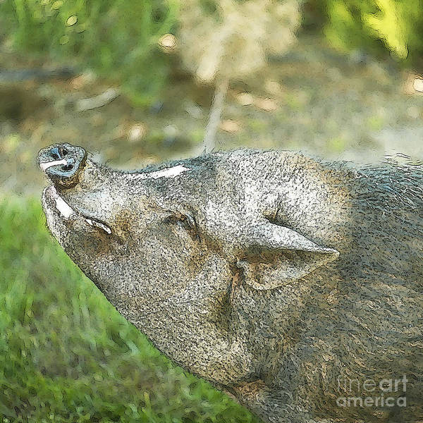 Pig Art Print featuring the photograph Woody Smiles by Artist and Photographer Laura Wrede