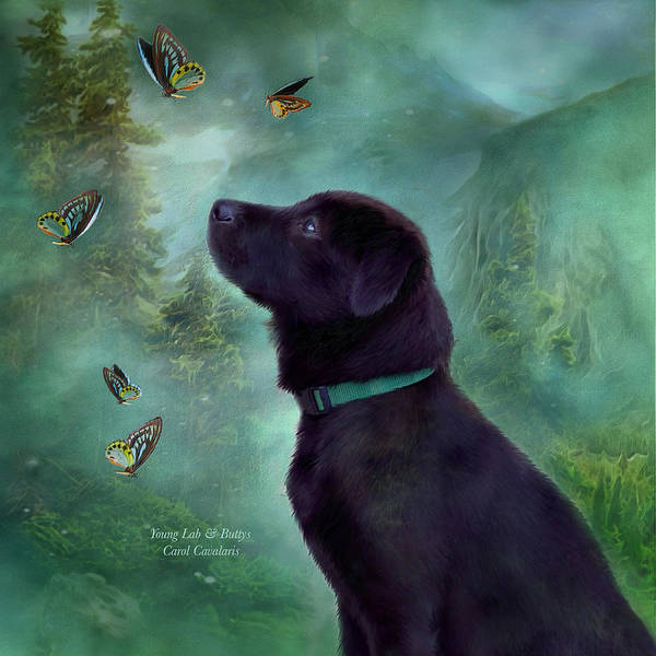 Lab Art Print featuring the photograph Young Lab And Buttys by Carol Cavalaris