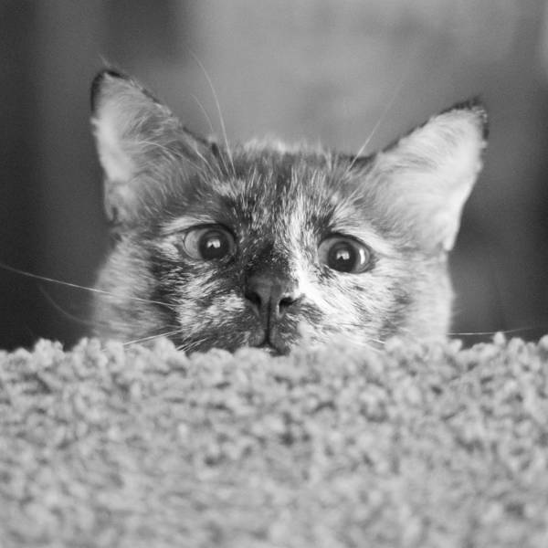Cat Art Print featuring the photograph Crazy Nermal by Kittysolo Photography