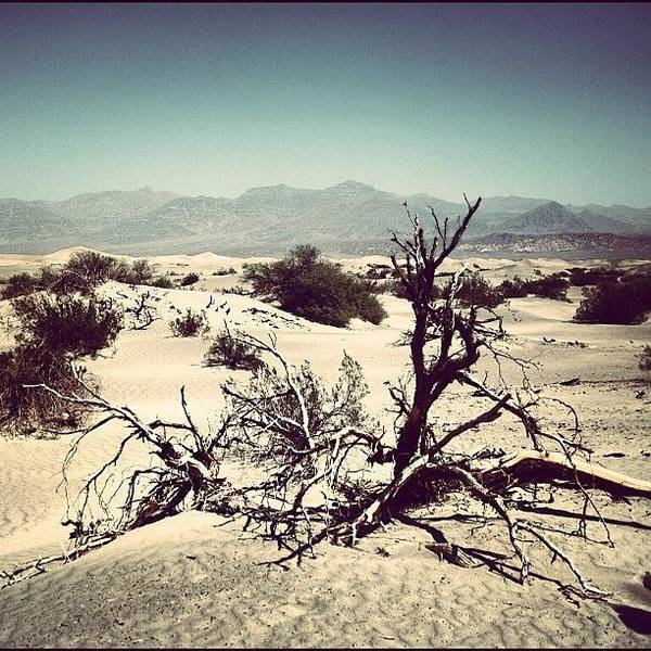 Art Print featuring the photograph Death Valley by Luisa Azzolini