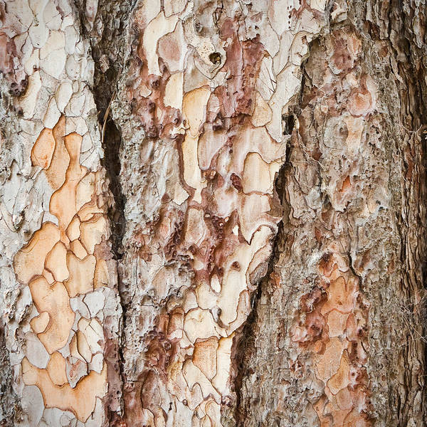Background Art Print featuring the photograph Tree Bark by Tom Gowanlock