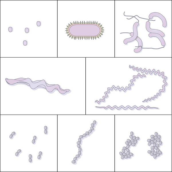Bacteria Art Print featuring the photograph Bacteria Shapes, Artwork by Peter Gardiner