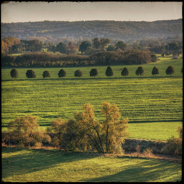 Square Art Print featuring the photograph Beautiful Landscape With Trees And Field by Fsn