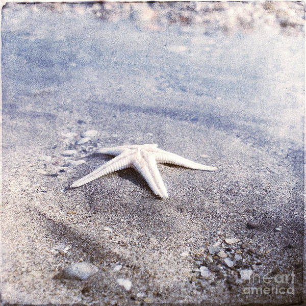 Bright Star Fish Beach Shore Sand Pebble Art Print featuring the photograph Bright Star by Paul Grand