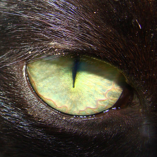 Cat Art Print featuring the photograph Cat's Eye by Shannon Blanchard