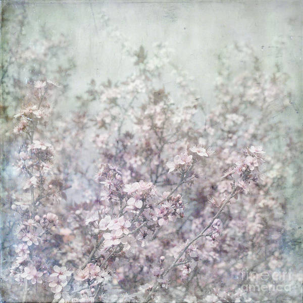 Cherry Blossom Grunge Flypaper Textures Art Print featuring the photograph Cherry Blossom Grunge by Paul Grand