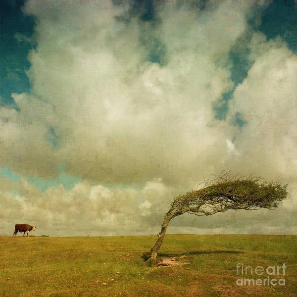 Daisy Art Print featuring the photograph Daisy Spots A Tree by Paul Grand
