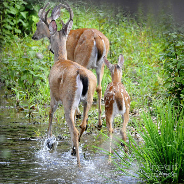 Nature Art Print featuring the photograph Deer Running In Stream by Nava Thompson